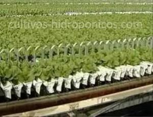 Con el soporte de las espalderas los cultivos hidropónicos aprovechan de mejor manera el espacio.