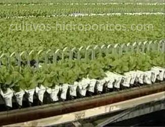 Mejora Tus Cultivos Hidroponicos Cultivos Hidroponicos - Cultivo-hidroponicos