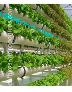La hidroponia es la agricultura expresada a su máximo nivel.