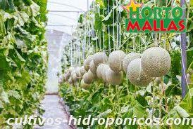 Tutoreo agrícola