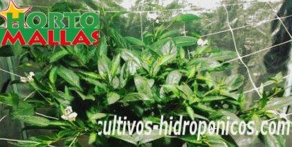 Cultivo hidroponicos
